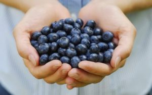 blueberry bread recipes